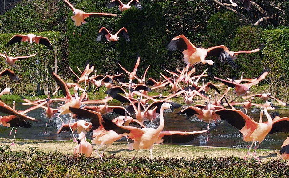 미야자키시봉황자연동물원
