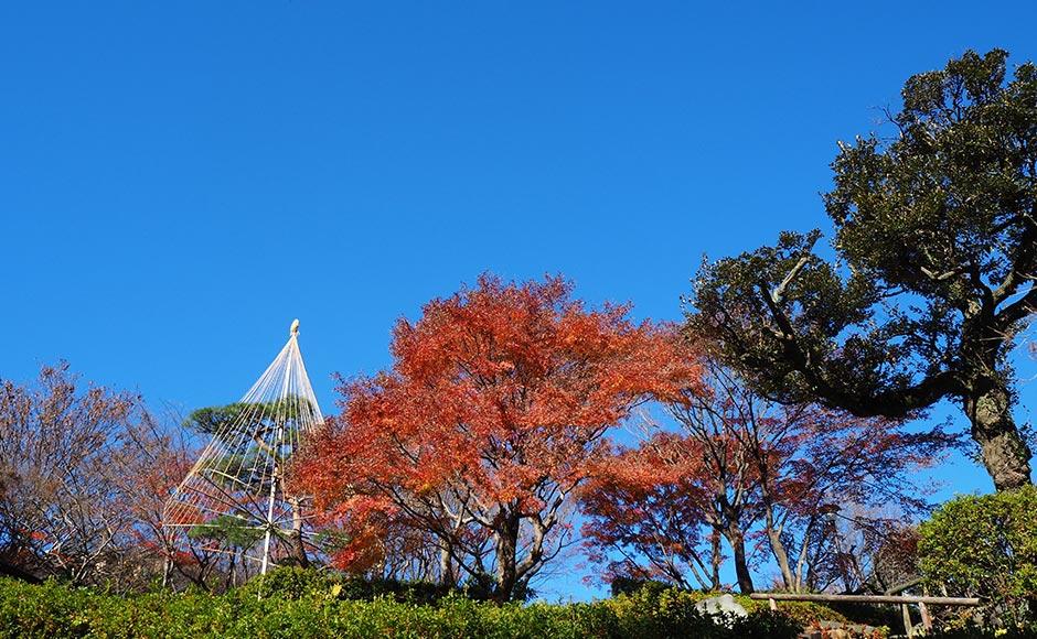 이케다야마 공원