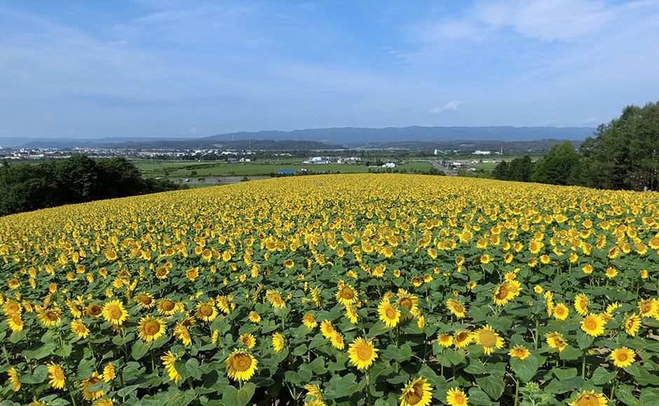 Nayoro Sunpillarpark