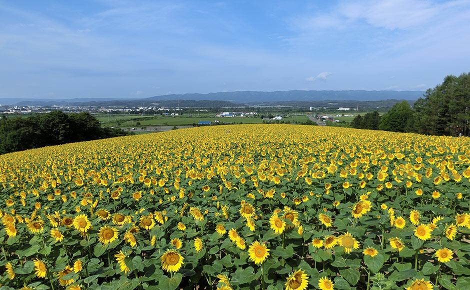 北海道光柱公园(Sunpillar Park)