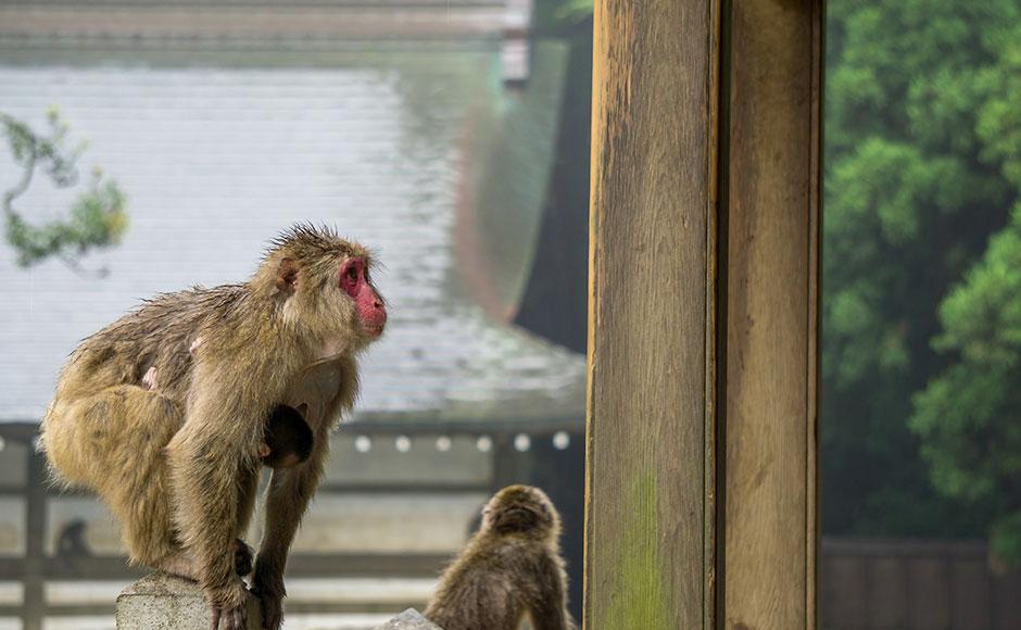 다카사키야마 자연 동물원