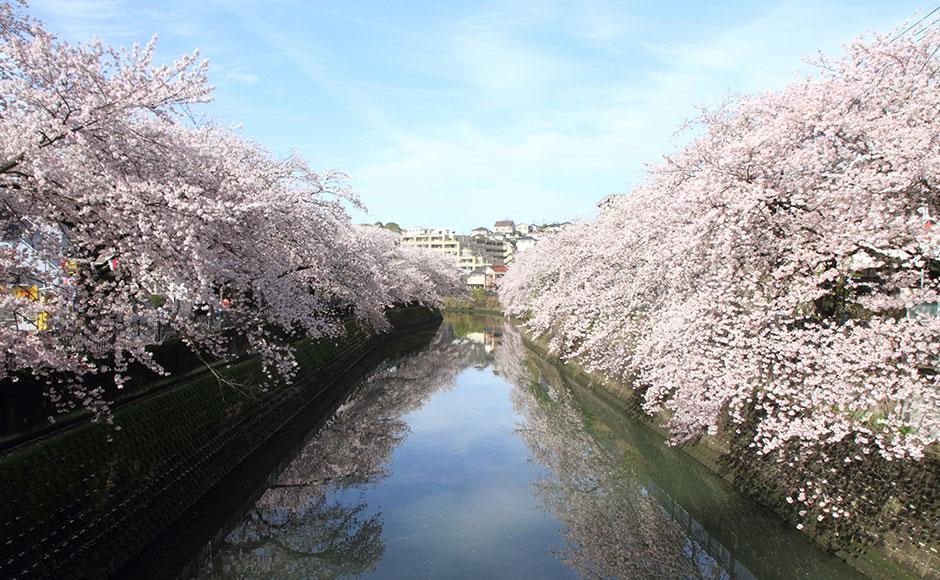 오오카가와