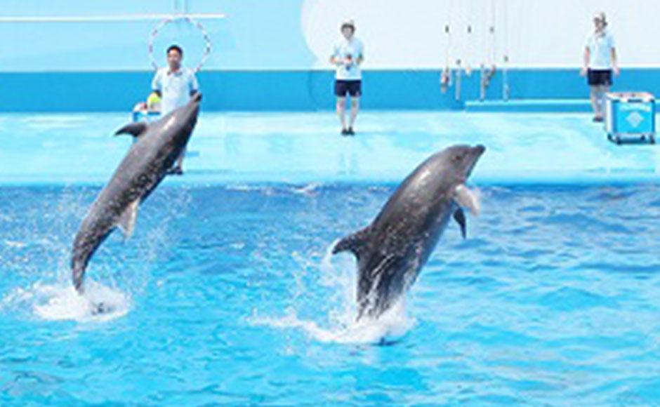 新潟市水族馆 匹亚日本海