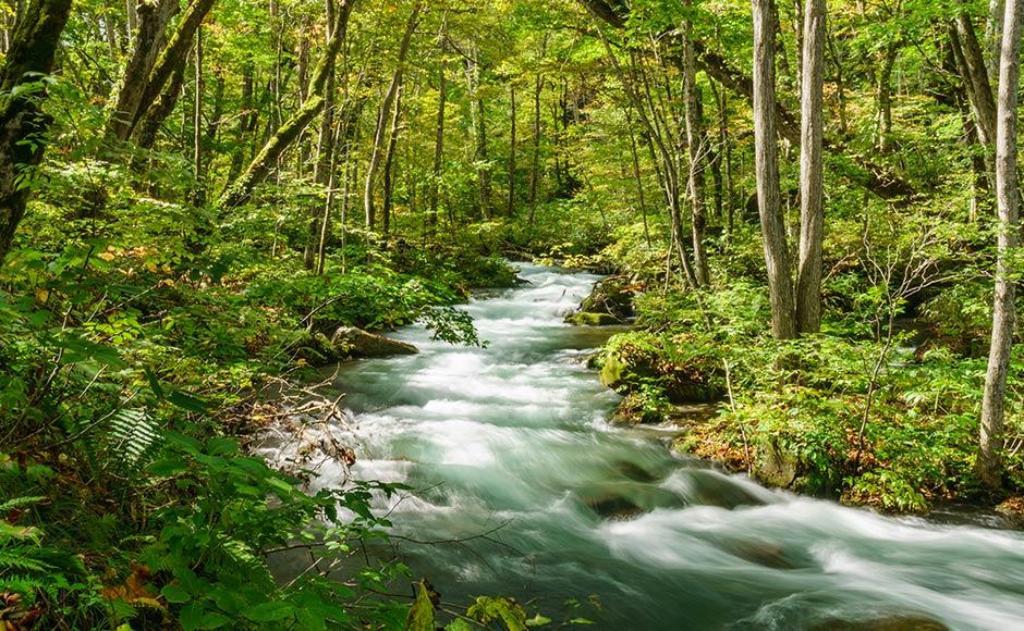十和田湖·奧入瀨溪流